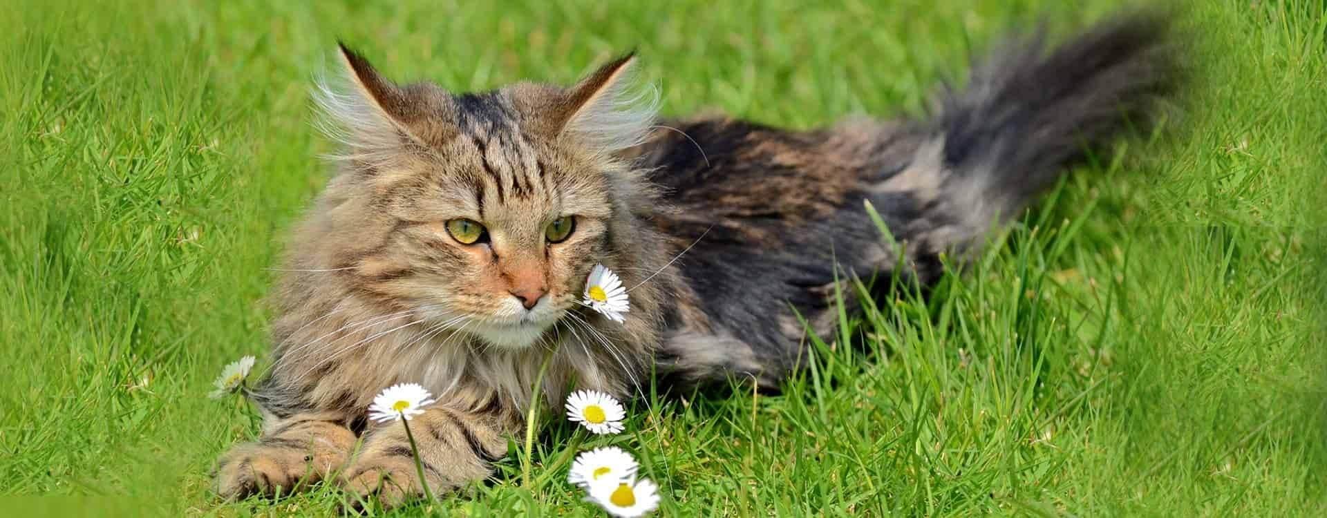 ...Z miłości do zwierząt, w trosce o Twojego pupila...