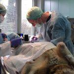 Przychodnia dla zwierząt ANIVET w Toruniu – badania laboratoryjne