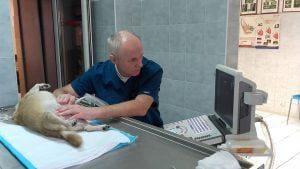 Przychodnia weterynaryjna ANIVET wToruniu zajmuje się wykonywaniem badań laboratoryjnych idiagnostyką chorób wewnętrznych iurazów doznanych przez zwierzęta domowe