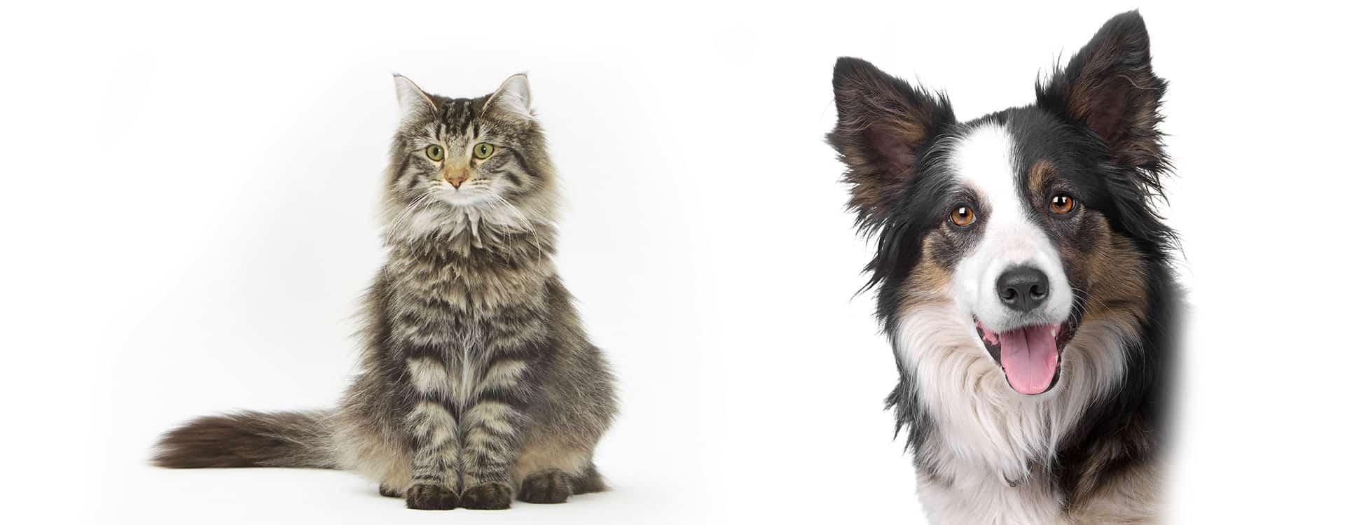 weterynarz...Wieloletnie doświadczenie w leczeniu zwierząt...